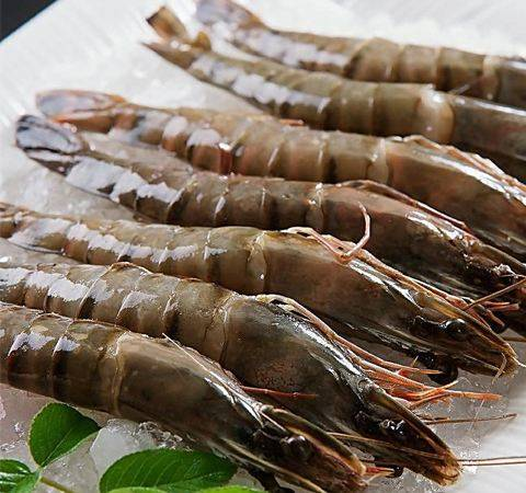被虾刺中险被截肢 小小的海虾为何有如此强大的威力?