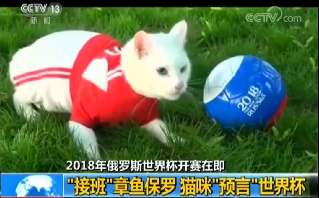 """冬宫猫咪预言世界杯 原是""""警卫猫""""的后代"""