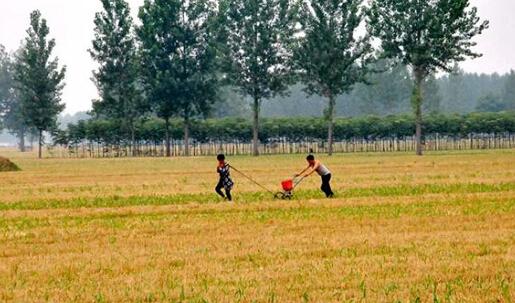河南省夏播基本完成 累计夏播面积8950万亩