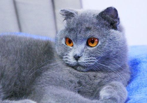 猫咪误食鼠药中毒 输狗血保命