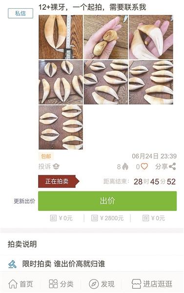 曝网络拍卖平台微拍堂上售卖野生动物制品