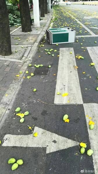 民众冒着台风戴安全帽捡芒果 网友:意识很到位!