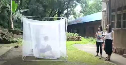 长沙妹以身诱蚊13年 随便看几眼就能认出蚊子种类
