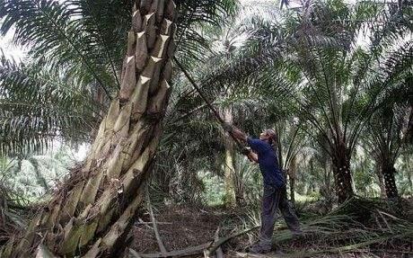 美中贸易争端升级令市场承压 马来西亚BMD棕榈油期货跌逾2%