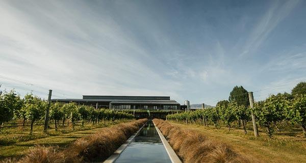新西兰葡萄酒业的翘楚 新玛利庄园