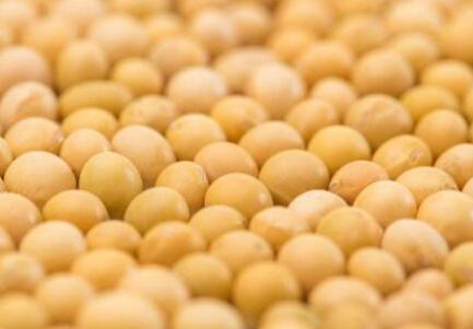 中方调整大豆进口 美豆跌入熊市