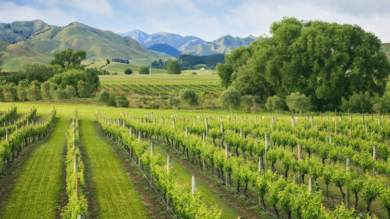 马尔堡葡萄酒生产商新设产区标识以保护葡萄酒名声