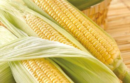 天气影响较大 玉米新季上市价或高开高走