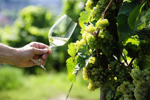 这些白葡萄酒是你的夏季消暑良品
