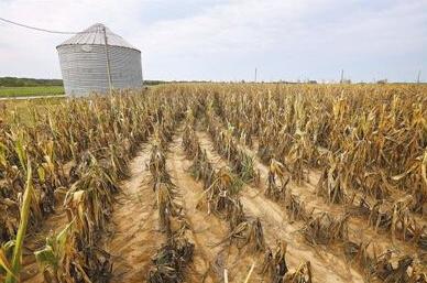 高温大雨肆虐全国 农产品生长艰难产量恐减少