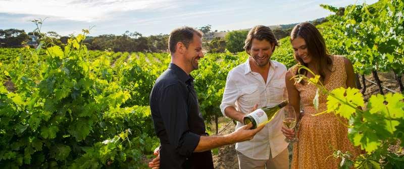 游酒庄品酒 怎样才能获得更好的体验