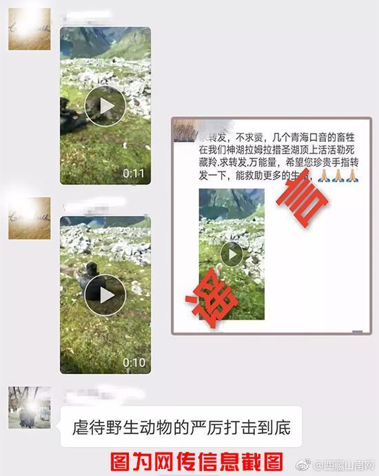 西藏有人勒死藏羚羊?经查实是虚假消息