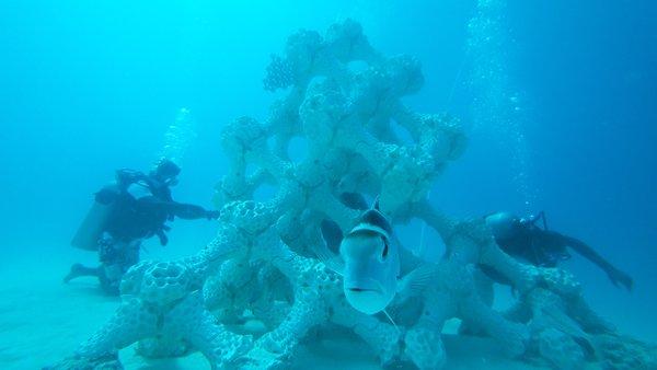 马尔代夫夏日岛矗立起世界最大3D打印珊瑚礁