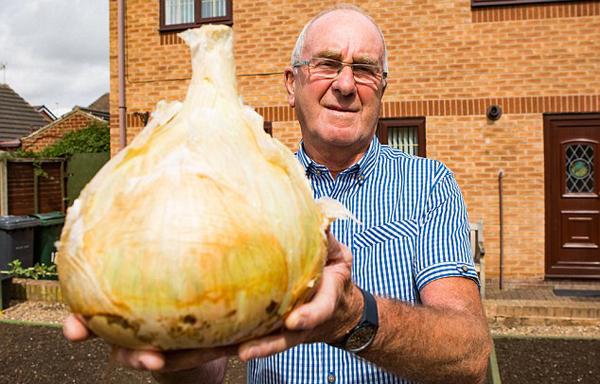 英国老人种出超级洋葱 重达4.54公斤围径达60厘米