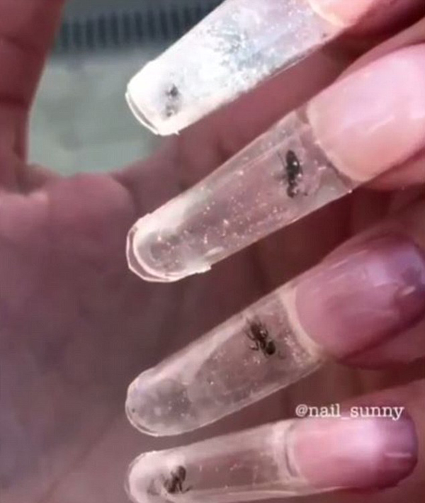 美甲店老板展示活蚂蚁水晶美甲 遭到网友的强烈谴责