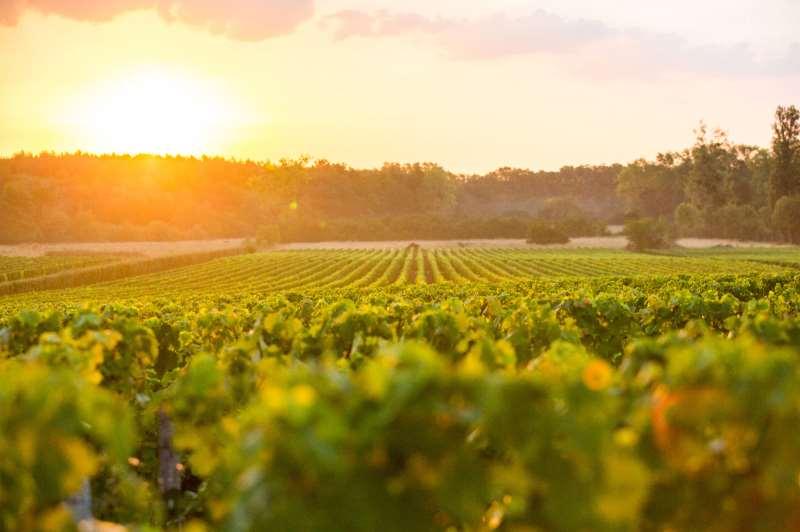 格拉夫 波尔多红葡萄酒的摇篮