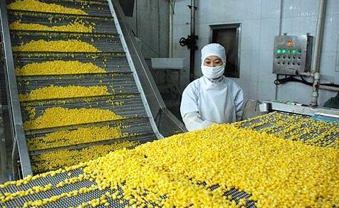 玉米下游深加工企业面临成本上升风险如何应对?