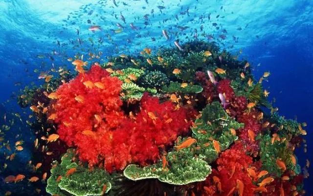 红珊瑚——升值不断的宝贝