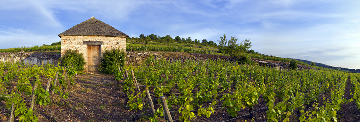 勃艮第名酒金丘产区土地价格每公顷攀升至1.25亿元