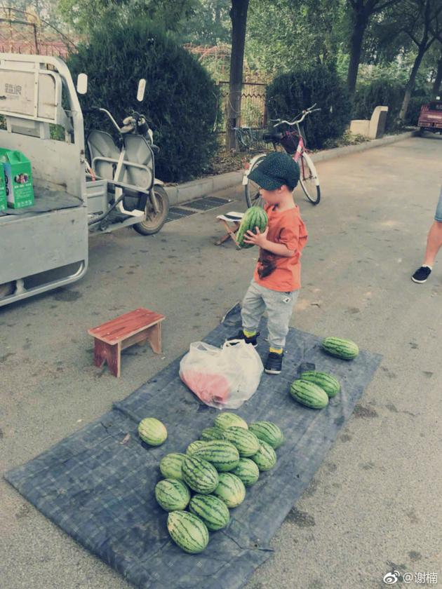 谢楠儿子帮忙卖瓜 走过路过捧个瓜场