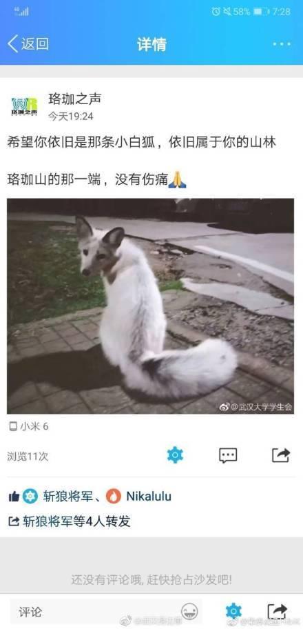 武大小白狐车祸去世 参与救助的同学伤心哭泣
