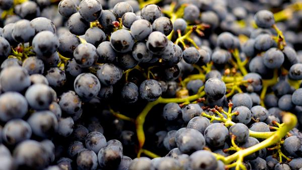 2018年法国葡萄产量或将较2017年增长27%