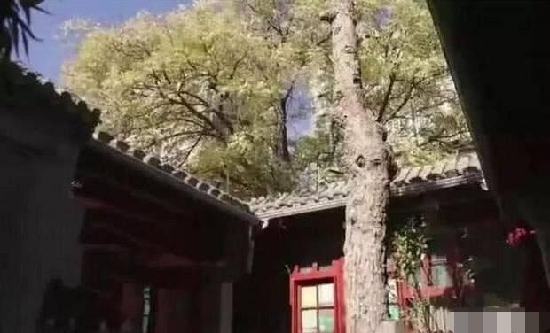 李晨北京四合院曝光 装修中国风很有年代感