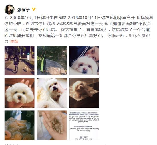张馨予发文悼念爱犬:谢谢你陪伴的18年