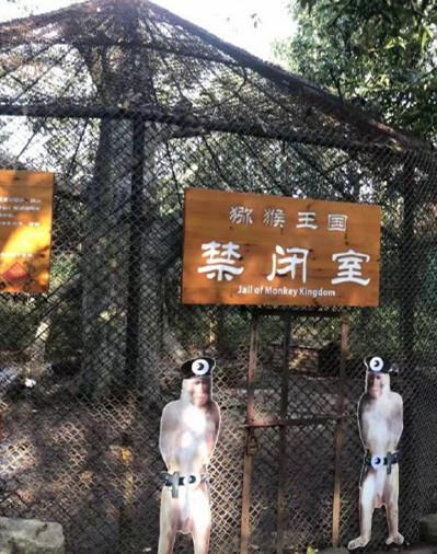 猕猴被景区关禁闭 关押时间一周到两个月不等