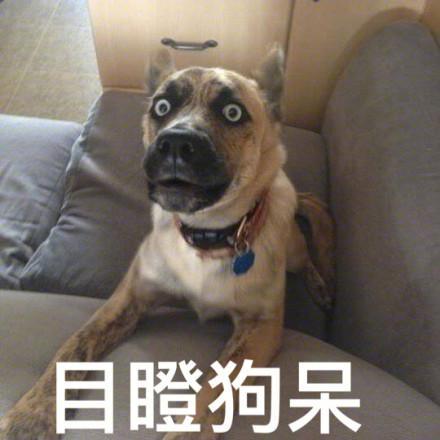 双标狗是什么意思