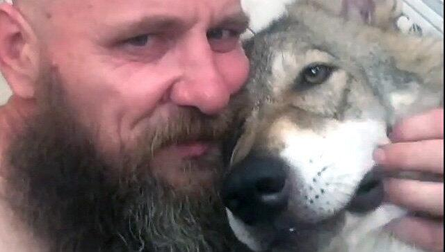 俄罗斯上演现实版狼人故事 一男子与狼生活在一起