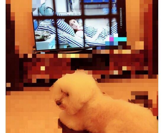 赵丽颖婚后首晒照 除了电视和狗其余部分都是马赛克