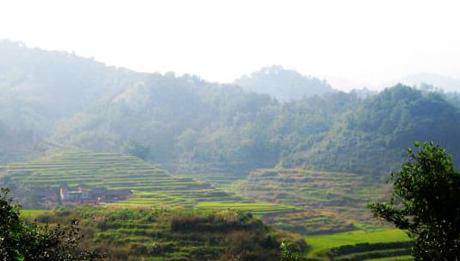 梧州茶叶出口总量收缩 出口总值较大提升
