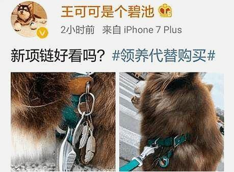 王思聪给爱犬买的银饰 比黄金还贵