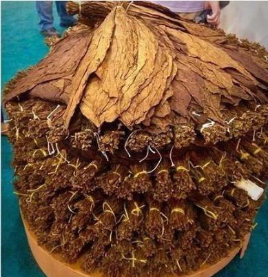 19世纪古巴雪茄醇化技术再现 CAO推出4款叠塔系列雪茄