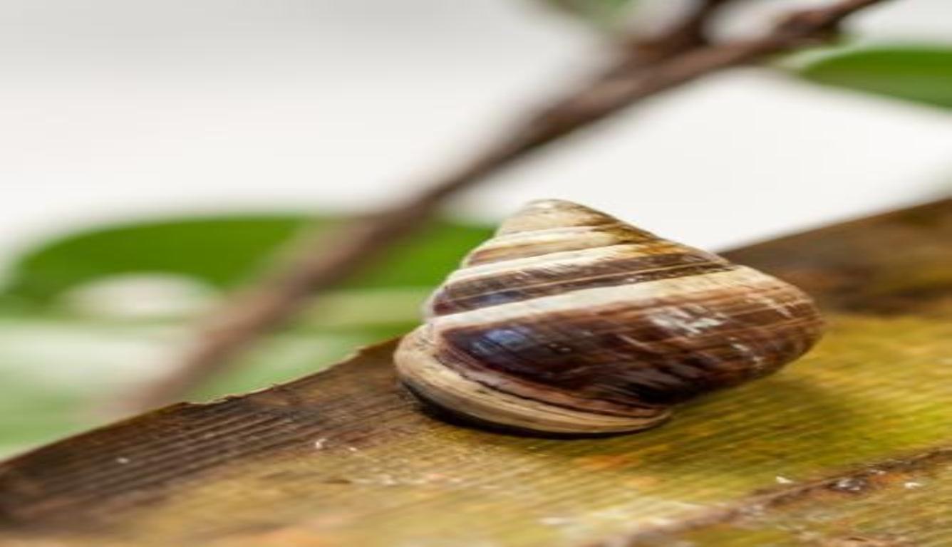 """地球上最孤独蜗牛离世 """"享年""""14岁"""