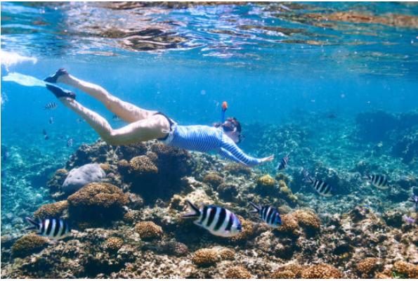 研究人员发现:化妆品化合物可能会通过改变脂肪酸来伤害珊瑚