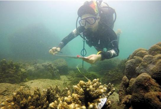 深圳市大鹏湾海域牧场专门种珊瑚