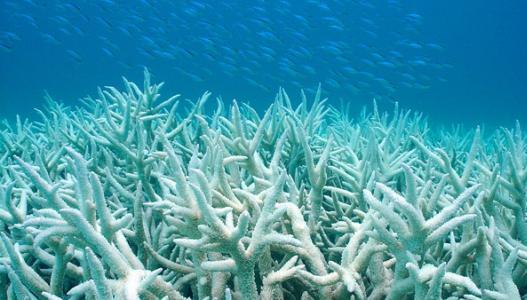 首次揭示珊瑚DNA的独特部分 发现有更高耐受性
