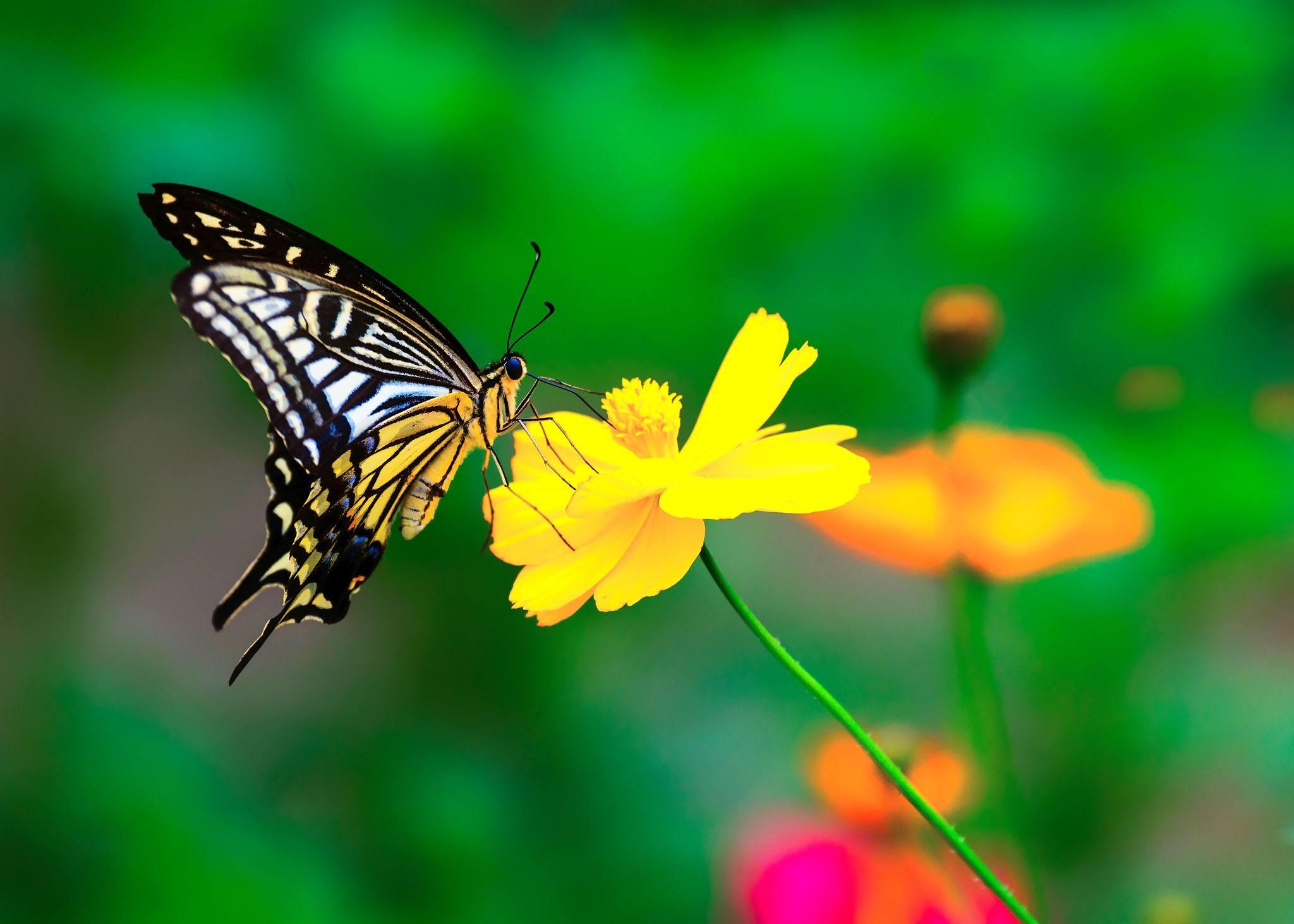 """全球昆虫数目减少 昆虫灭绝会导致自然生态系统""""灾难性崩溃"""""""
