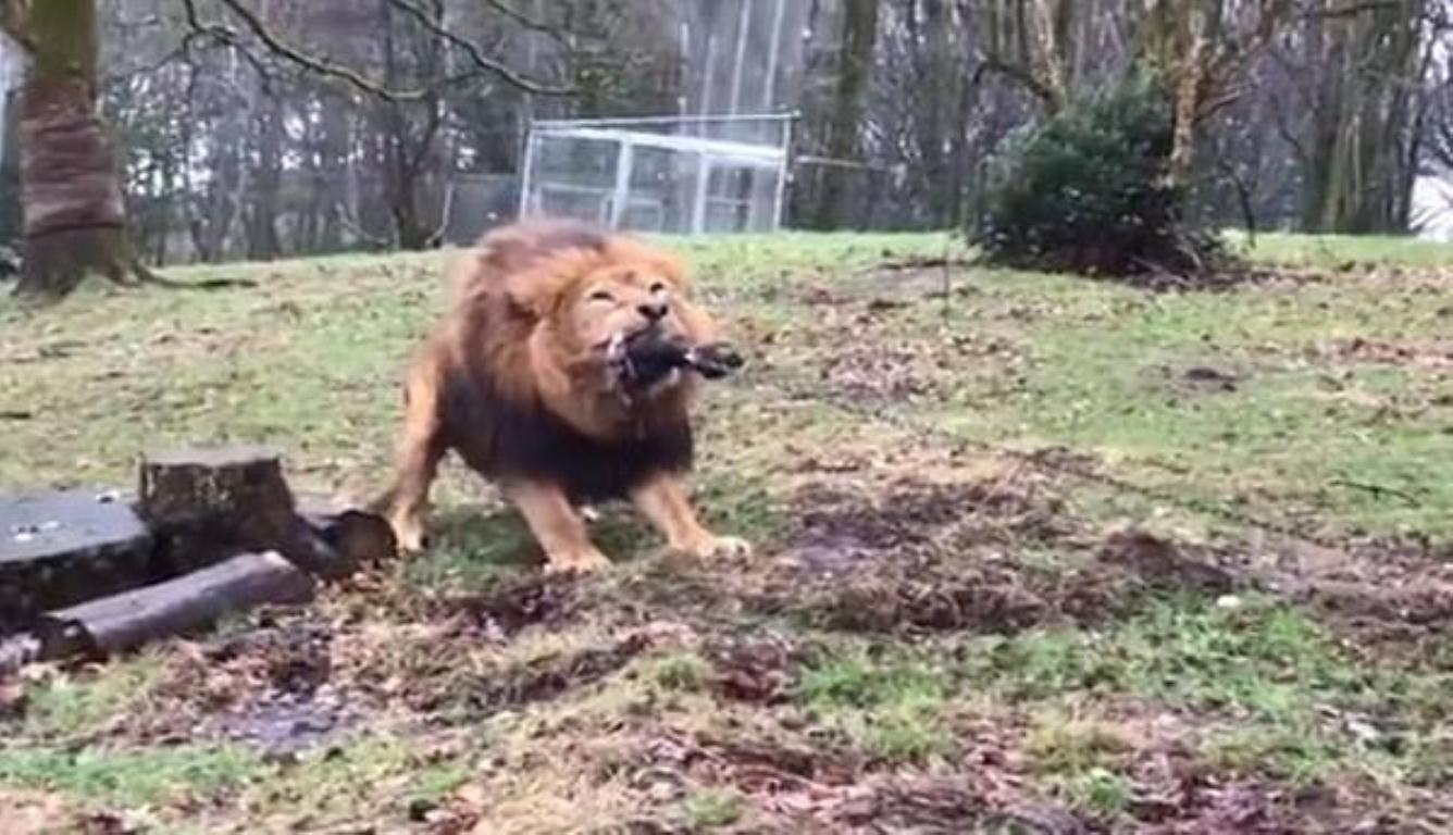 """动物园搞人狮拔河 网友认为这一活动""""可耻"""""""