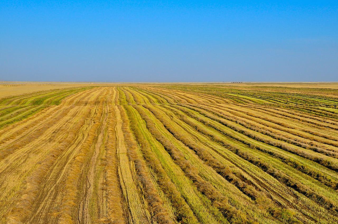 农发行1300亿元信贷资金支持年度秋粮收购
