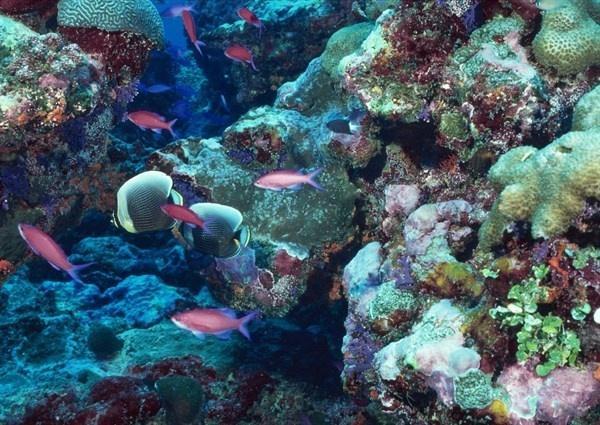 游客因非法采挖涠洲岛活体珊瑚被拘留
