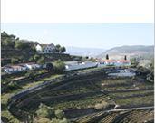 葡萄牙黄金河谷 飞鸟园酒庄
