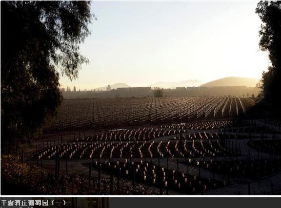 干露酒庄——智利最大的葡萄酒业集团
