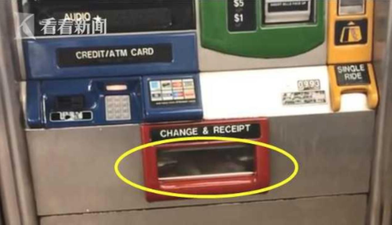 纽约地铁老鼠乱窜 网友认为这是地铁部门剿鼠失职