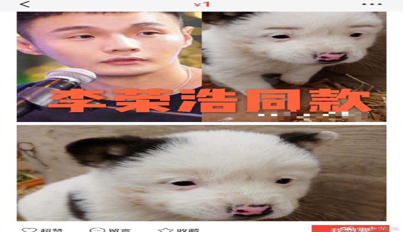 """李荣浩晒同款狗狗 发问""""为什么卖那么便宜?"""""""