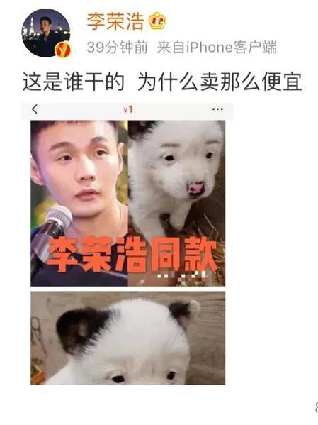 李荣浩同款狗狗是怎么回事