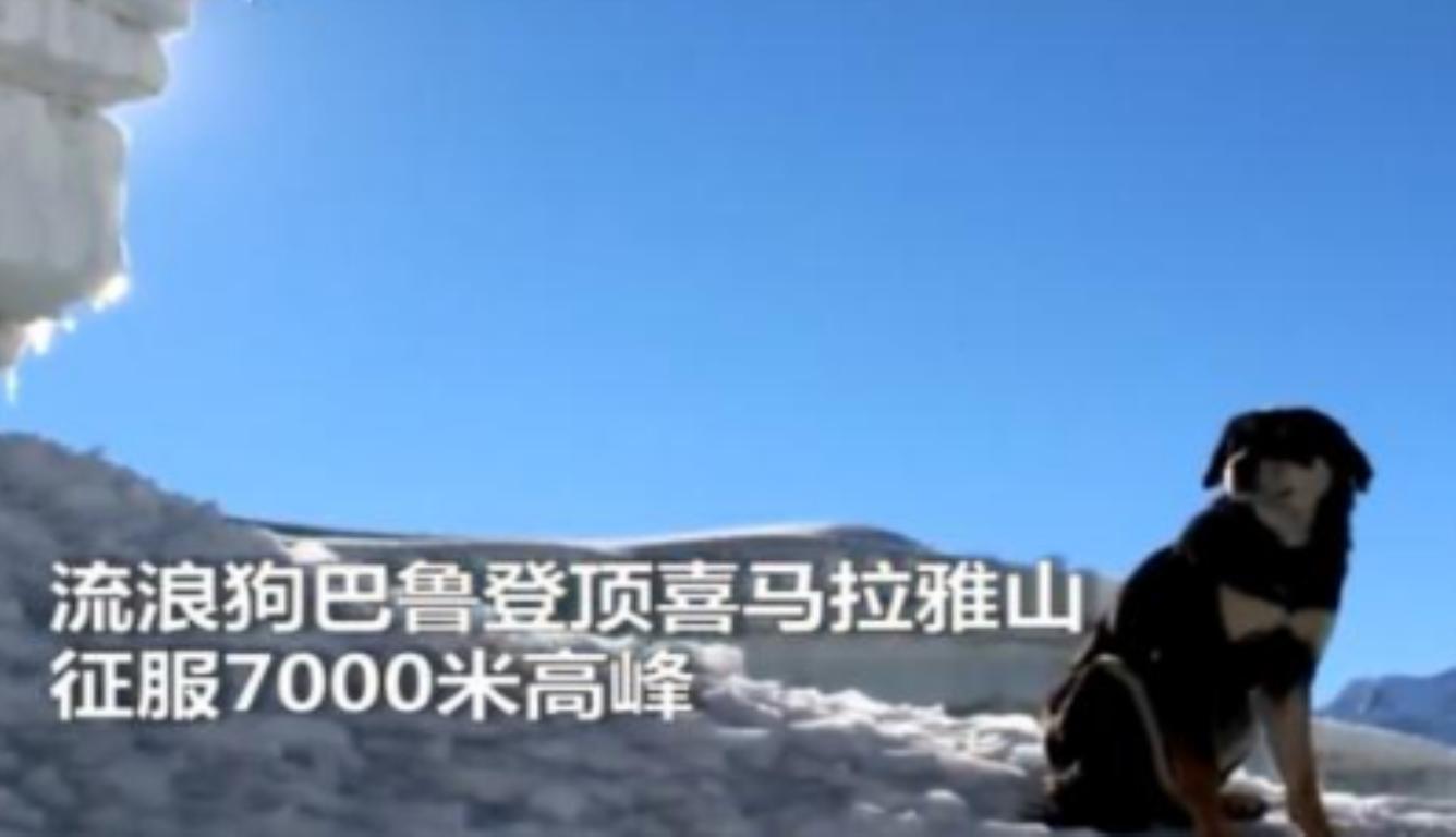 这只狗征服喜马拉雅山 创造狗狗攀岩的最高世界纪录