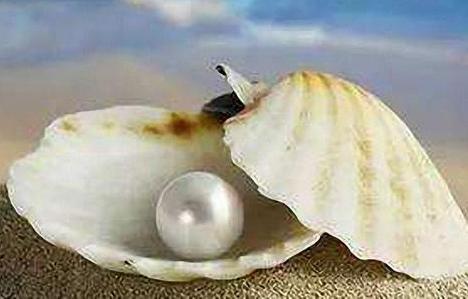 旅游景点活蚌取珍珠的珍珠是真的吗?